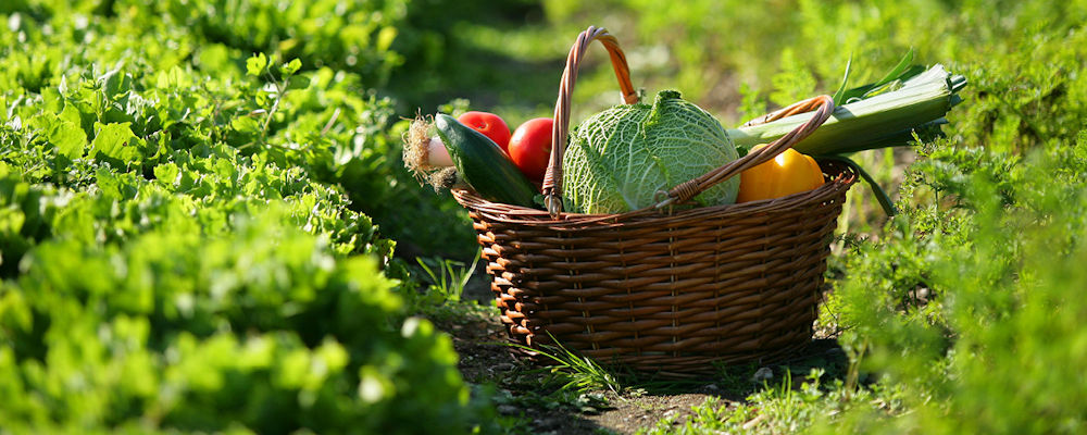 Responsable Agronomique